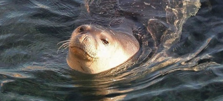 Cyprus Environment Featured Saving the world's rarest marine mammal in Cyprus