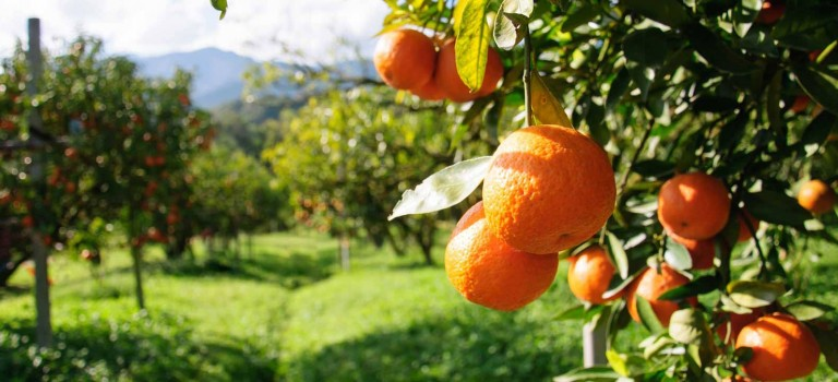 Cyprus has over 3,000 hectares of fruit trees