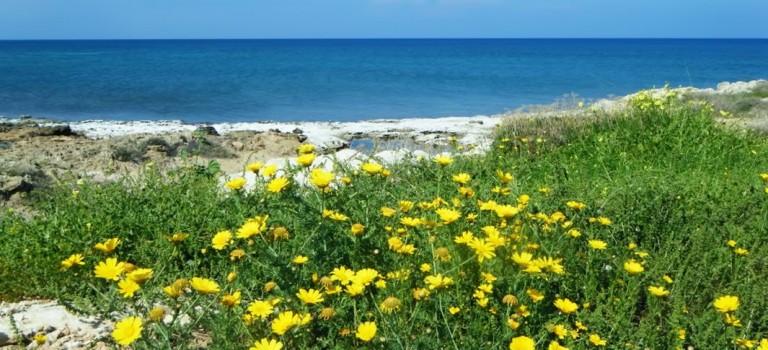 Cyprus Flora & Fauna